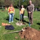 tree planting at park